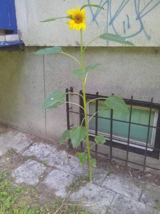 w Lublinie