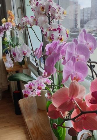 Orchidee Caffe_BlogCaffe.jpg
