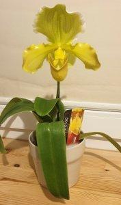 Wystawa Orchidei Ogród Botaniczny UW